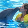 What Swimming With Dolphins Is Actually Like For The Dolphins