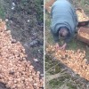 Someone Just Dumped 1,000+ Chicks In A Field And Left Them To Die