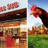 Quiznos Pledges To Only Source 'Ethically Treated' Chicken
