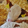 Former Colorado Beef Ranch Is Now A Thriving Animal Sanctuary