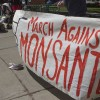 Monsanto set to halt GM push in Europe