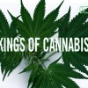 Kings of Cannabis (Full Length Documentary)