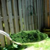 Chlorella: Superfood with Detoxing Capabilities
