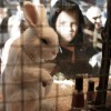 China to Ban Animal Testing On Certain Products