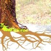 Why Trees Are Even More Awesome Than You Think