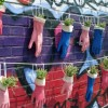 Organic urban gardening for beginners