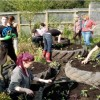 Incredible Edible free food project replicated worldwide