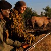 These guys uses military tactics to save Rhinos from poachers in Zimbabwe.