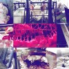 The Truth About How Animals Are Treated Before They End On Your Plate