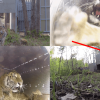 Watch This Epic Tiger Release in Russia
