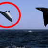 A Magnificent, Unexplainable Encounter Was Filmed. You Must See This!