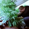 "UK Police Announce They Will Stop Arresting ""Small-Time"" Marijuana Growers"