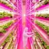 Japan Just Debuted The Largest Indoor Farm