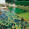 8 Reasons Why Natural Swimming Pools Are Awesome!