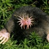 Animals You May Not Have Known Existed