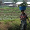 Triumph For Farmers As Guatemala Kick Out The Most Insane Law Ever!