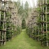 You'll Love This Outdoor Cathedral Made of Living, Breathing Trees