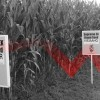 Monsanto's Stock Downgraded As Sales Crash: Is Activism Responsible?