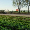 This Edible Park Feeds 200,000 Hungry People Every Month!