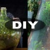 Remember The Sealed Bottle Garden That Was Last Watered in 1972?  Here's How You Can Make One.
