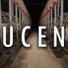 Lucent: The Documentary That Exposes The Dark Side of Australia's Pig Farming Industry
