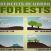 Experts Suggest Urban Forests To Make Cities More Natural And Livable