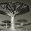 This Woman Took Pictures Of Trees for Over 14 Years… And What She's Captured Is Incredible