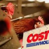 Costco Announced It Will Phase Out Antibiotic-Treated Meat