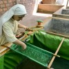 To Fight Malnutrition, These African Nuns Grow Protein-Rich Spirulina Behind Their Health Clinic
