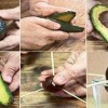 How To Grow An Avocado Tree for Endless Organic Avocados