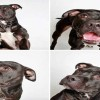 This Shelter Took Its Dogs To a PhotoBooth To Get Them Adopted – And It Worked!