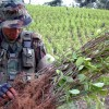 Colombia Bans Monsanto's RoundUp From Being Sprayed On Coca Plants