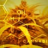 """Scientist: Cannabis Cures Cancer By Making Bad Cells """"Commit Suicide"""""""