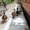 In The UK, Even DUCKS Get Their Own Lane!