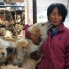 Chinese Woman Pays $1,100 To Save 100 Dogs From Chinese Dog-Eating Festival