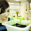 Easy Ways To Save Money, Eat Well And Have Fun By Regrowing Old Vegetable Scraps