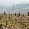 Study: Humans Must Preserve Plant Life Or Prepare For Extinction