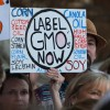 Shocking? 68% Of Doctors Believe GMOs Should Be Labeled