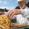 100,000 German Beekeepers Just Called For A Ban On GMOs