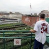 Fenway Park is 'Going Organic' With NEW Rooftop Garden!