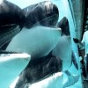 SeaWorld Self-Funds Study To Prove Orca Longevity, And It Ends Up Backfiring…