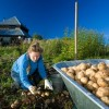 40% Of Russia's Food Is Grown From Dacha Gardens