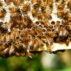 US Beekeepers Report That Honeybee Populations Are Growing Again!
