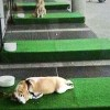 """IKEA Opens """"Dog Parking Lot"""" To Keep Dogs Out Of Hot Cars"""