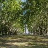 This Is What Happened When The City Of Melbourne Gave Email Addresses To Trees…