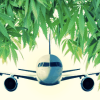 Airline Passengers May Now Legally Carry Marijuana On Oregon Flights