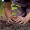 Watch Out, Google, This Website Plants Trees With Every Search