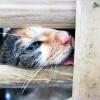Activists Save 1,000 Cats On their Way To Be Illegally Slaughtered In China…