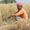 25,000 Indian Farmers Threatening Mass Suicide After Government Destroyed Land