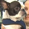 Pilot Diverts Plane To Save Pup's Life, With Support From Airline And Passengers